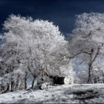 breathtaking_infrared_photos_26