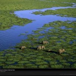 aerial-view-elephants-kenyaAmazing Aerial Photography