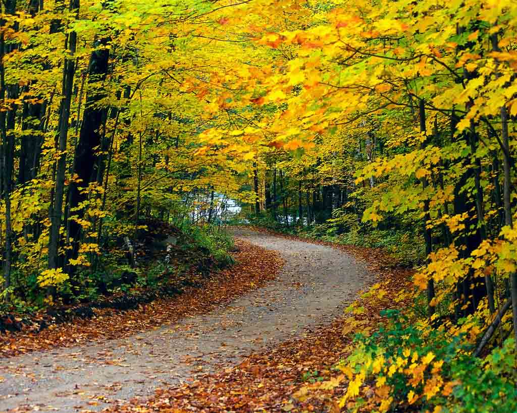 20 Best Autumn Road Desktop Wallpaper Of 2011