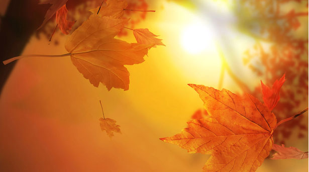 15 Most Romantic Autumn Desktop Wallpapers