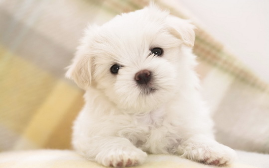 30+ Adorable Puppy Pictures