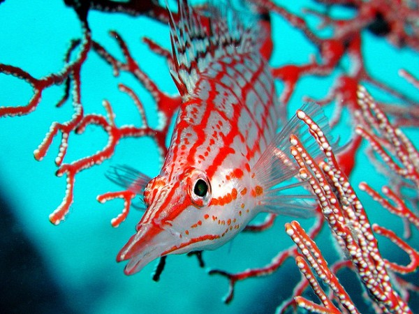 25+ Beautiful Underwater Photography